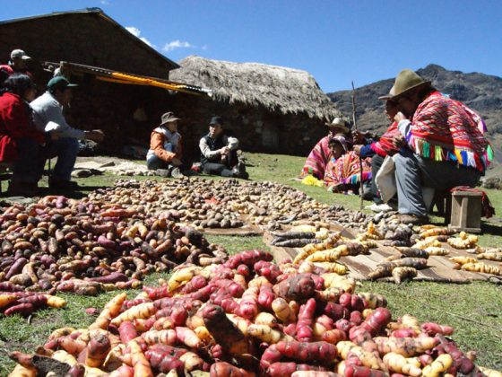 The Tuber Trail - A Journey into Peru's Quechua Potato Culture