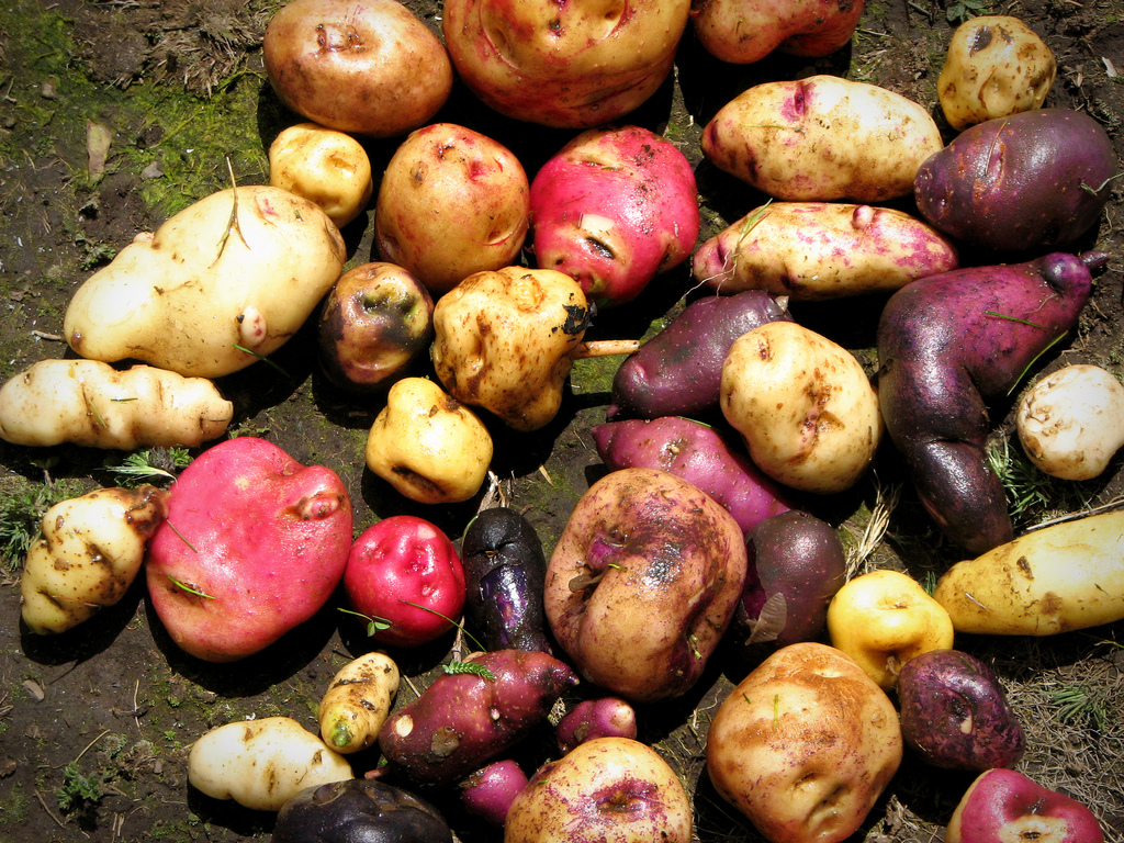 Facts You Didn't Know About Potatoes